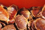 08_crabs-widescreen